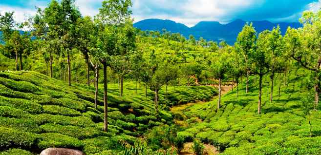 Image result for Thekkady