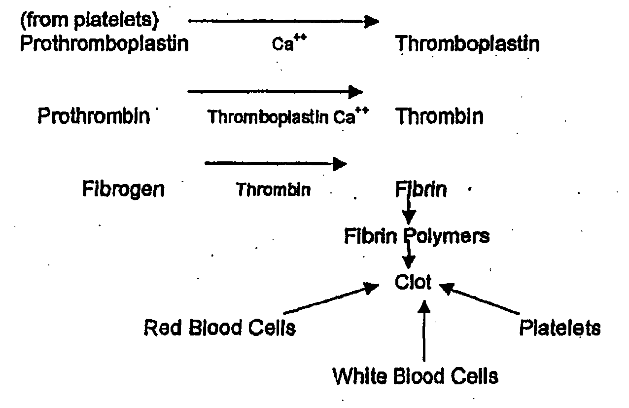 Blood Clotting Mechanism Flowchart