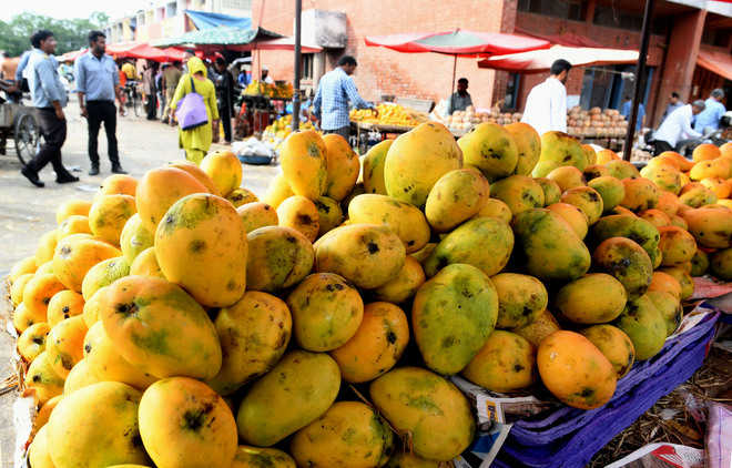 No check on artificial ripening of fruits at Sec 26 market in city