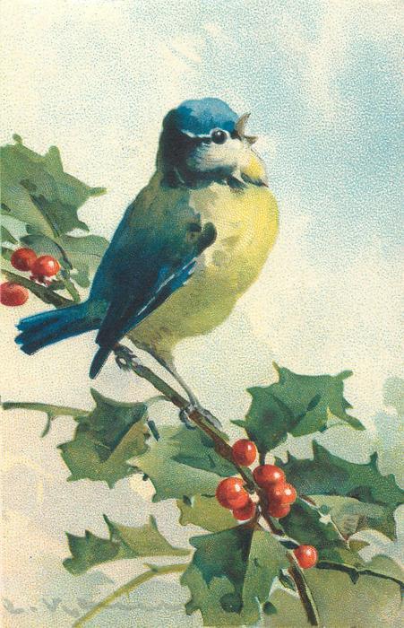 One Bluetit On Holly Branch TuckDB Postcards