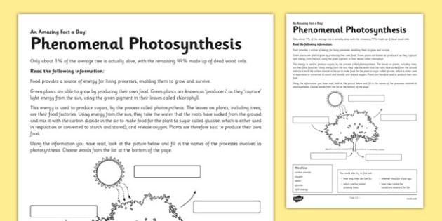 Phenomenal Photosynthesis Worksheet Worksheet