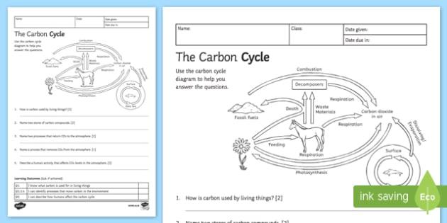 Ks3 Carbon Cycle Homework Worksheet Worksheet