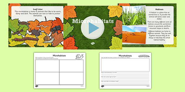 Living Things And Their Habitats Microhabitats Lesson