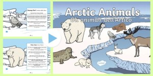 Winter Arctic Animals Habitat PowerPoint EnglishItalian
