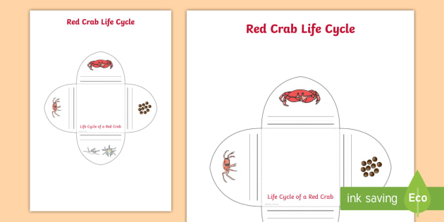 Red Crab Life Cycle Interactive Visual Aid Teacher Made