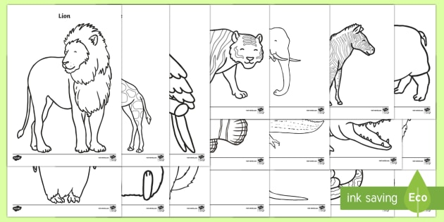 Zoo Animals Coloring Pages Teacher Made