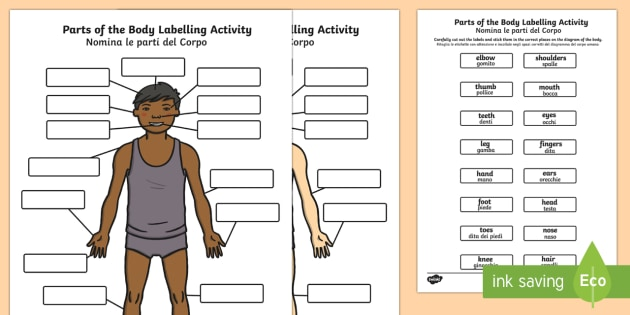 Body Parts Labelling Activity English Italian Body Parts Labelling Activity