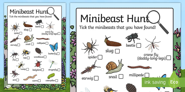 Minibeast Hunt Sheet Minibeast Hunt Minibeast Investigation