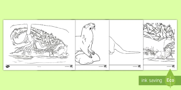 Otter Coloring Pages Teacher Made