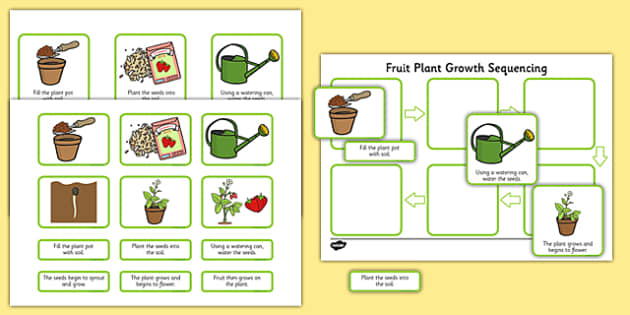 Plant Growth Sequencing Activity Teacher Made