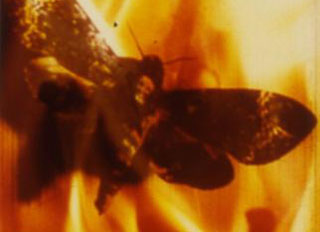 Butterfly flying through fire