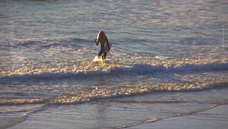 Female surfer walks into the ocean
