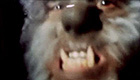 Close-up of a wolfman growling