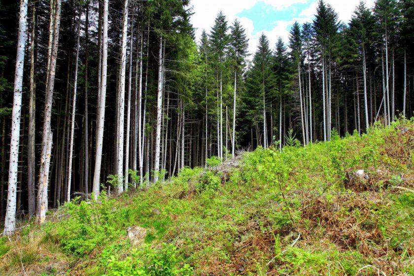 Світовий банк надасть допомогу для впровадження Національної лісової програми / Фото УНІАН
