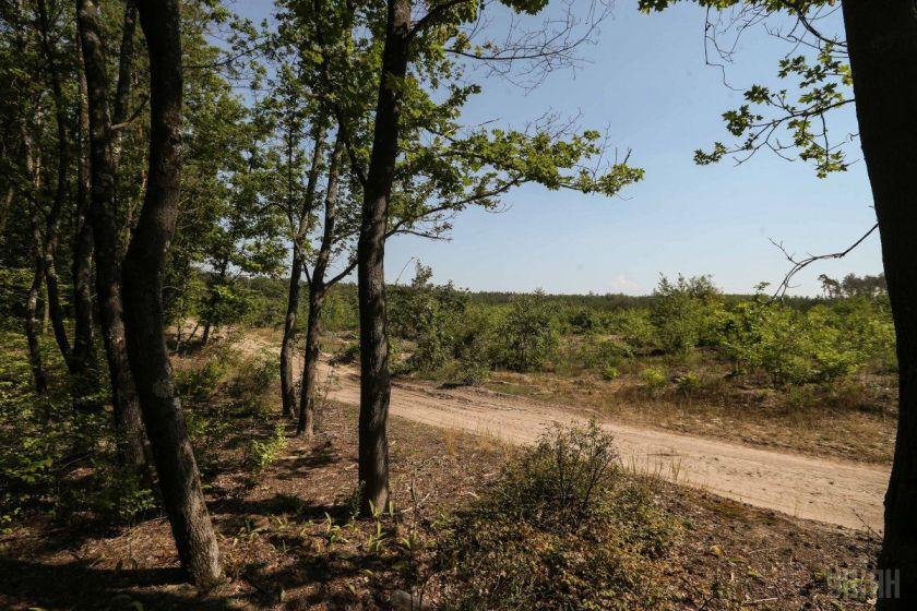 Майже 400 тисяч гектарів українського лісу висихає / фото УНІАН