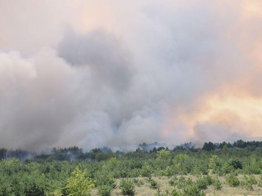 Масштабна лісова пожежа на Миколаївщині / фото ДСНС