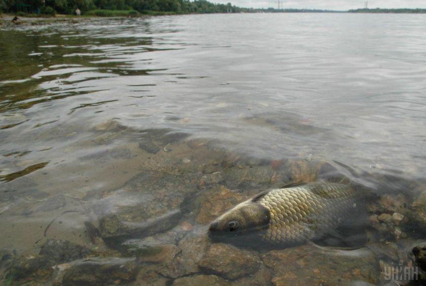 На Житомирщині екологи зафіксували масову загибель риби у річці Гуйва / фото УНІАН