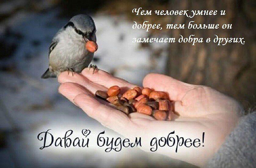 Всемирный день доброты - поздравления / pinterest.ru