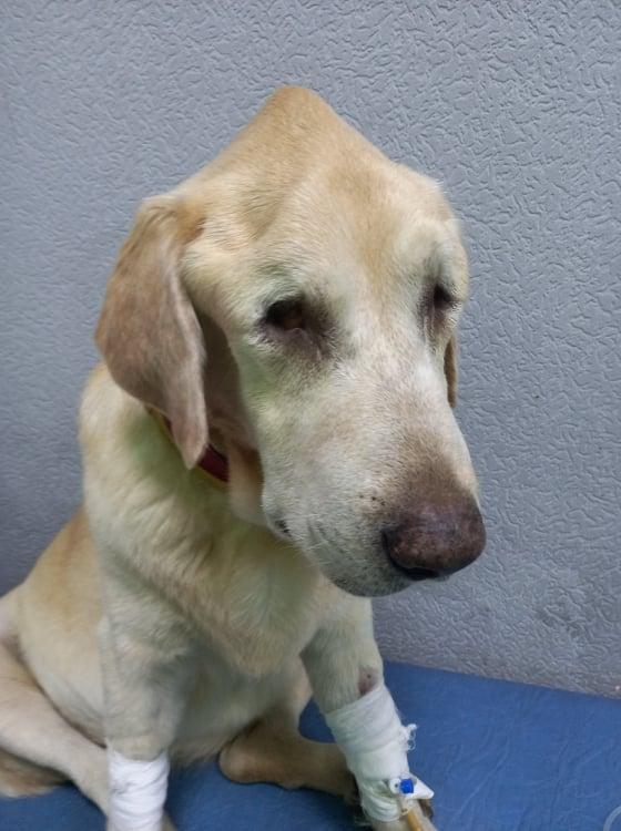 Собака находится в очень плохом состоянии / фото Facebook Валерия Зацная