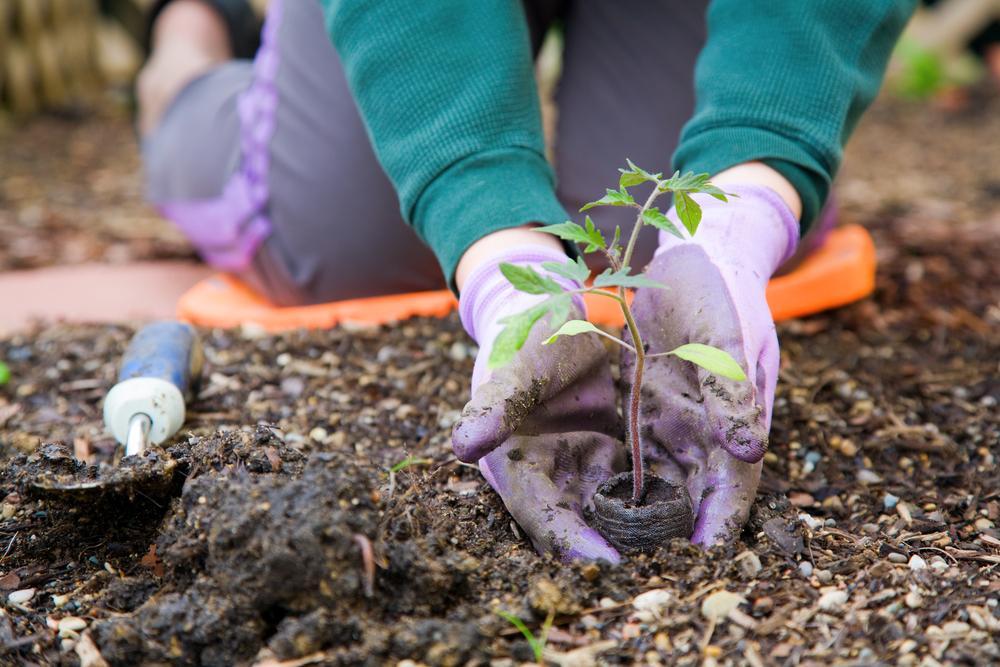 Лунный календарь огородника на январь 2021 / фото ua.depositphotos.com