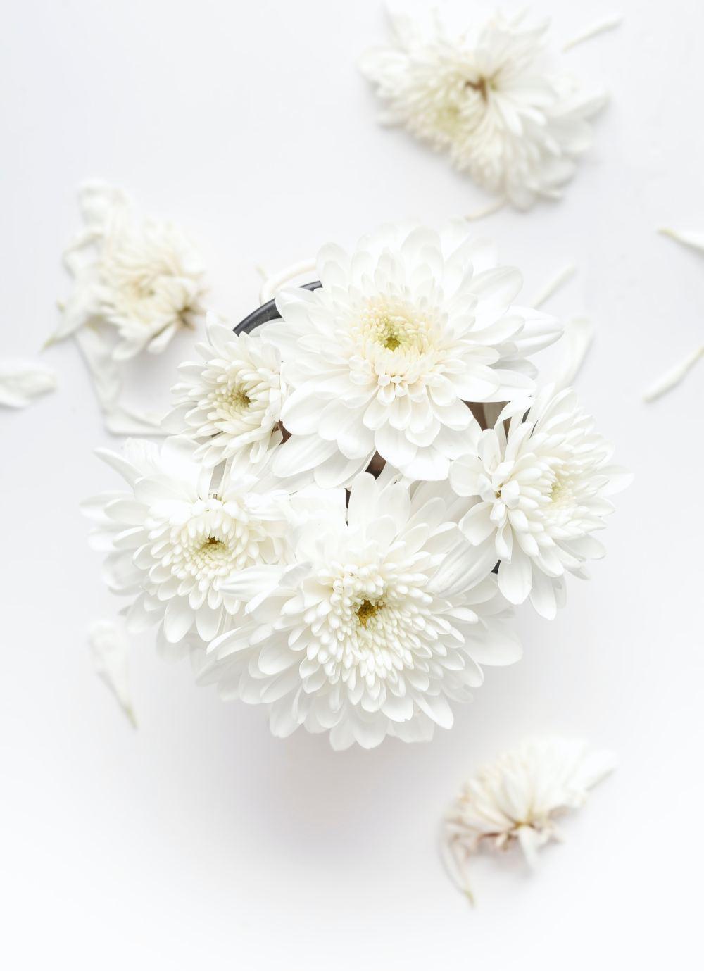 Floral Wallpapers Free Hd Download 500 Hq Unsplash