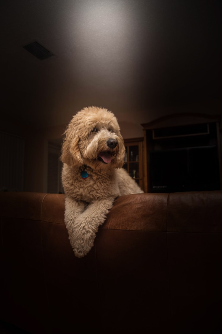 Dog Animal Pet And Black Hd Photo By Andr 233 Spieker