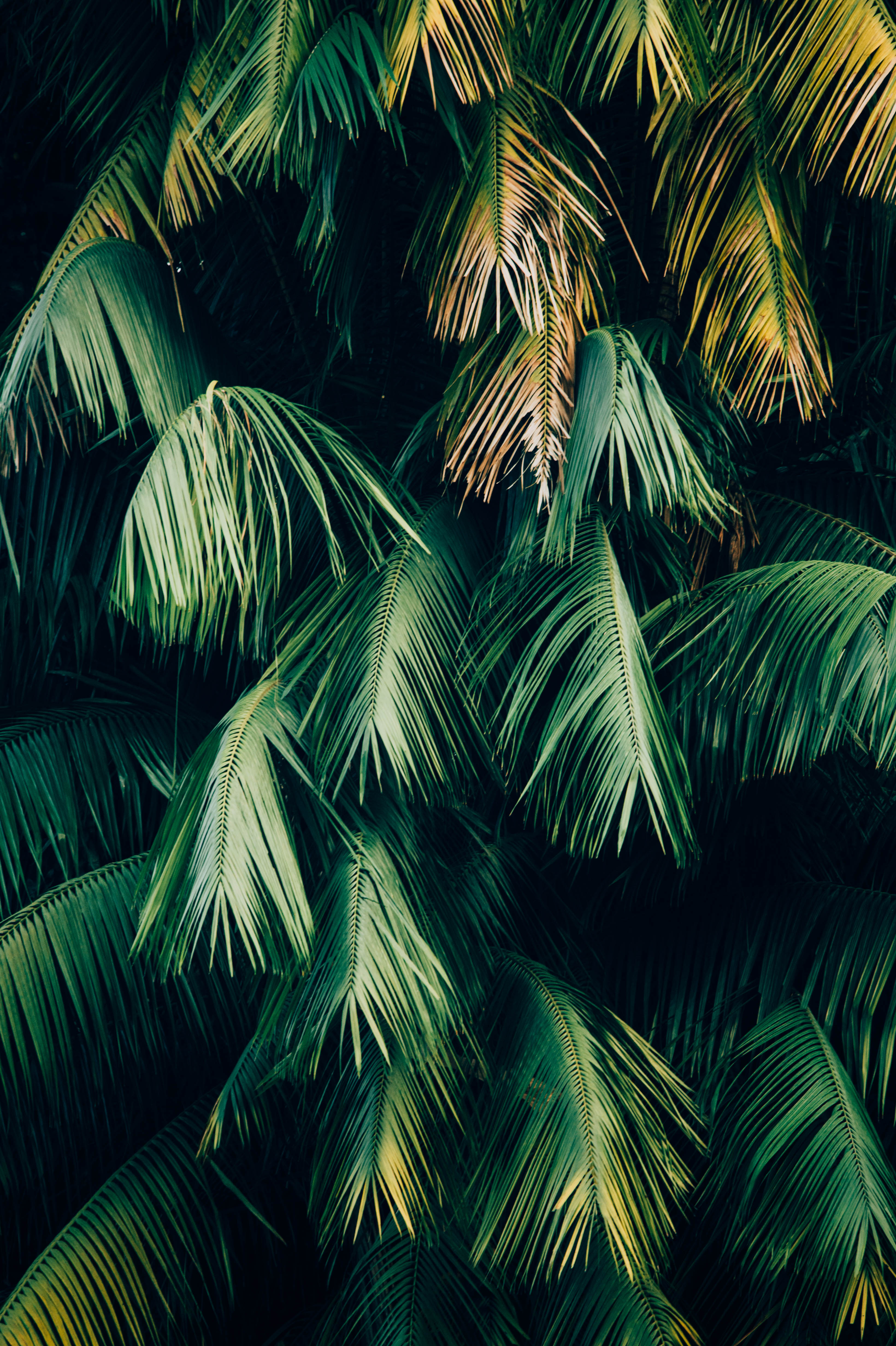 Android Wallpapers   Find your next android wallpaper on Unsplash     green leafed trees