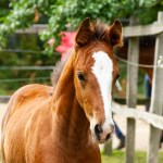 Brown And White Horse During Daytime Photo Free Horse Image On Unsplash