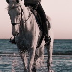 Person Riding On White Horse On Beach During Daytime Photo Free Horse Image On Unsplash