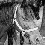 Black And White Horse Pictures Download Free Images On Unsplash