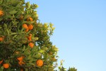 5 Questions to Ask Before You Buy a Fruit Tree for Your Backyard