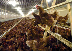 Image result for cage free hen house