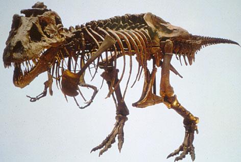 https://i2.wp.com/images.usatoday.com/tech/_photos/2006/11/07/fossil472.jpg