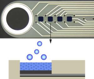 Im oberen Teil der Abbildung ist eine vergrößerte Aufnahme der in Freiburg hergestellten Mikrosonde zur Stimulation und gleichzeitigen Datengewinnung zu sehen. Unten ein Querschnitt der Beschichtung aus dem Polymer PEDOT, in das ein entzündungshemmendes Medikament eingespeichert ist, dass durch Anlegen von negativer Spannung freigesetzt werden kann.