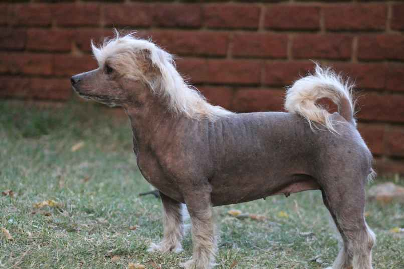 Dog Lipoma Hair Loss | Lipstutorial org