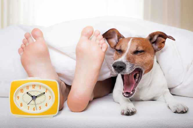 Train Your Dog To Be Alarm Clock