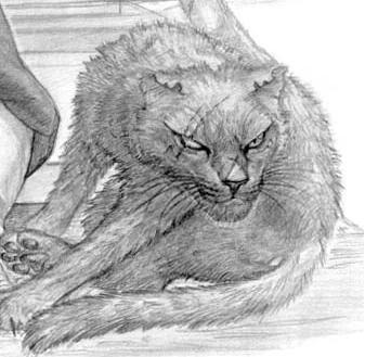 Rysunek Gribbo autorstwa Paula Kidby