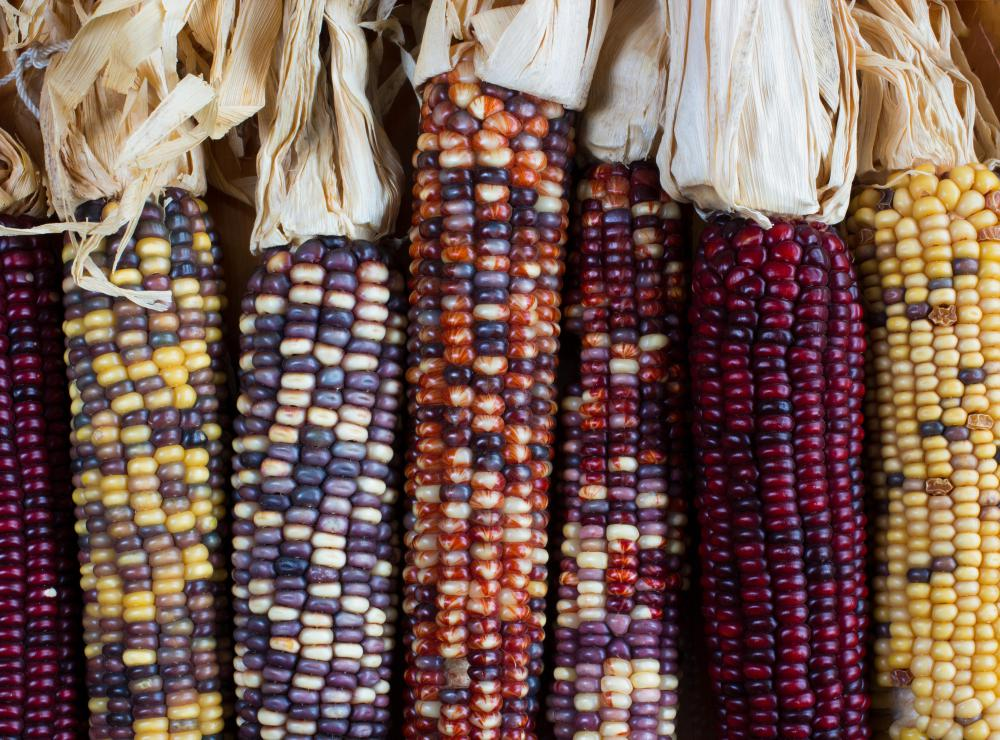 Native American Hopi Blue Corn