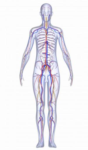 What is the Enteric Nervous System? (with pictures)