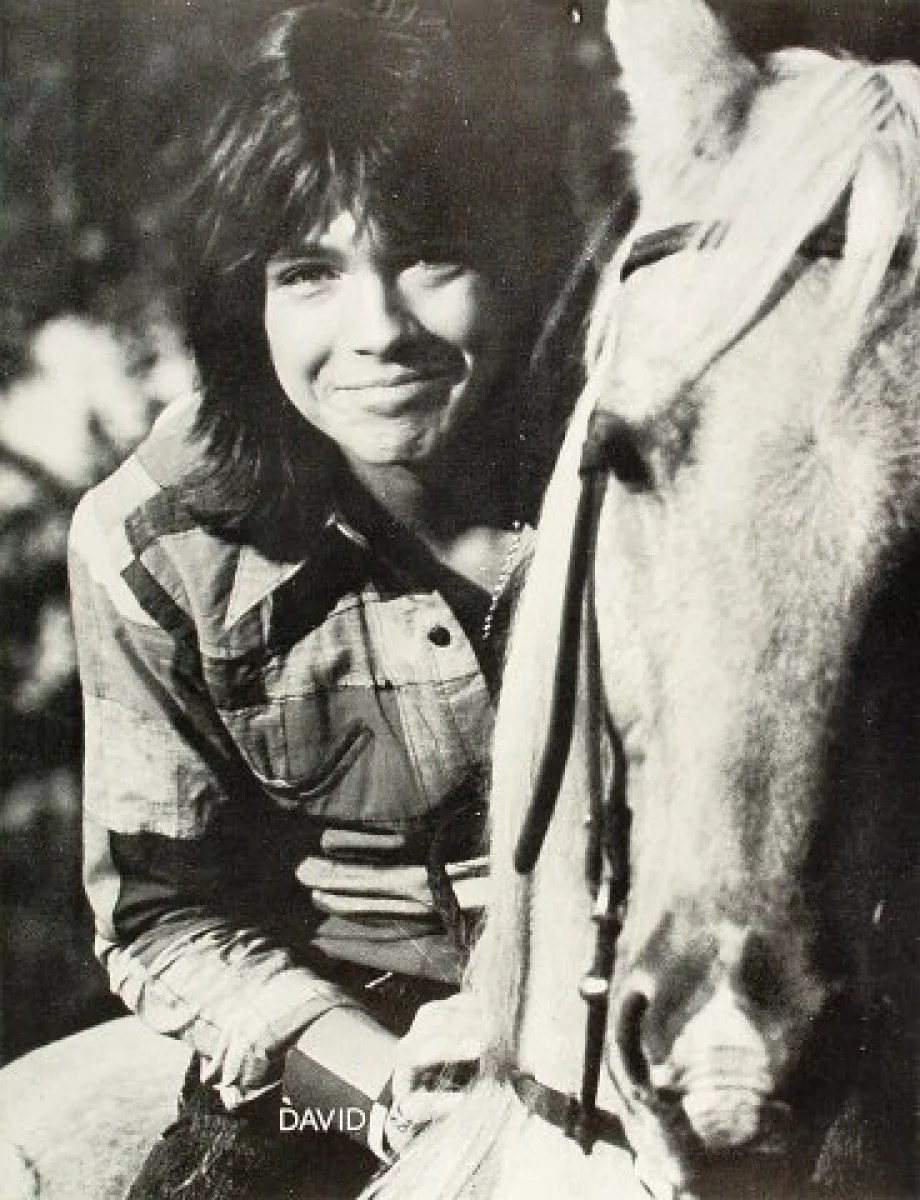 david cassidy vintage concert poster at wolfgang s