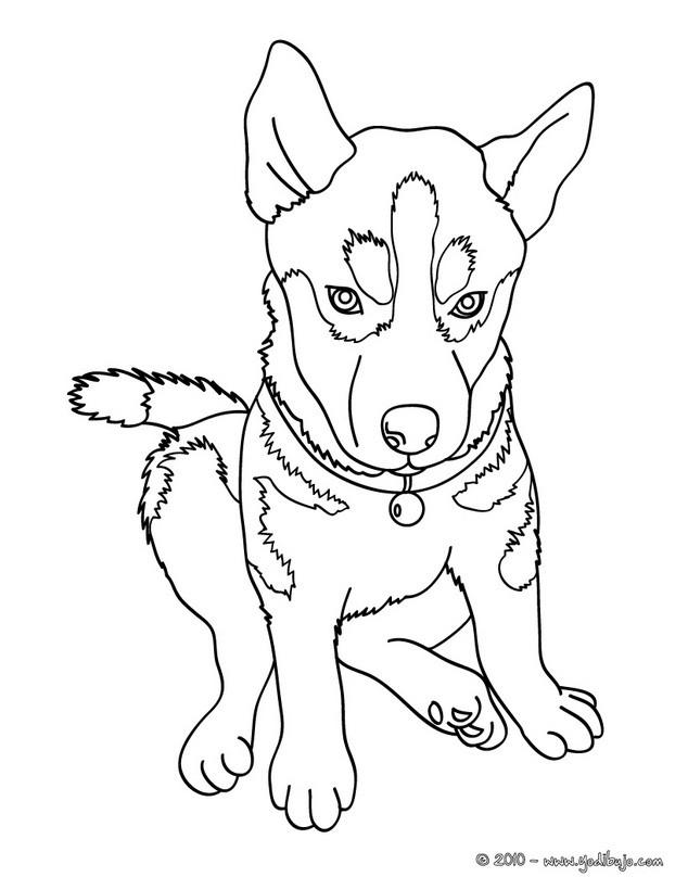 dibujos perros para colorear cachorro pastor aleman para imprimir