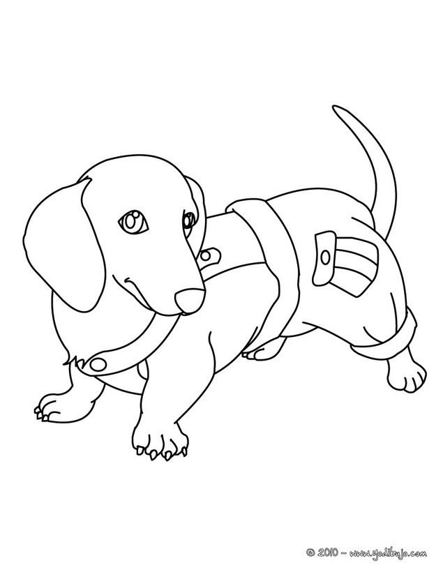 dibujos perros para colorear perro salsicha para imprimir