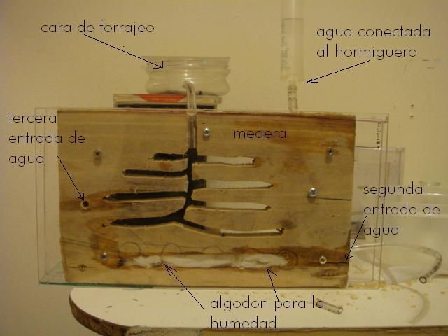 Image Titled Build An Ant Farm Step 1
