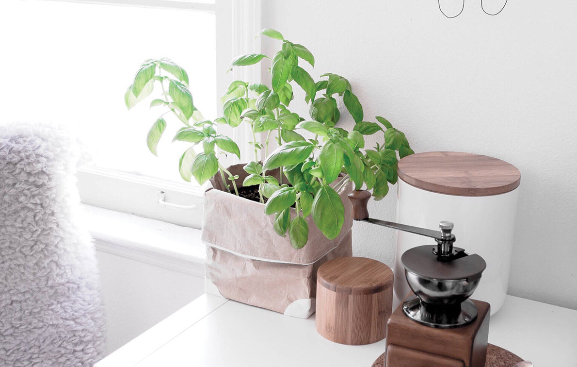 The Secret to Keeping Basil Fresh for Two Weeks