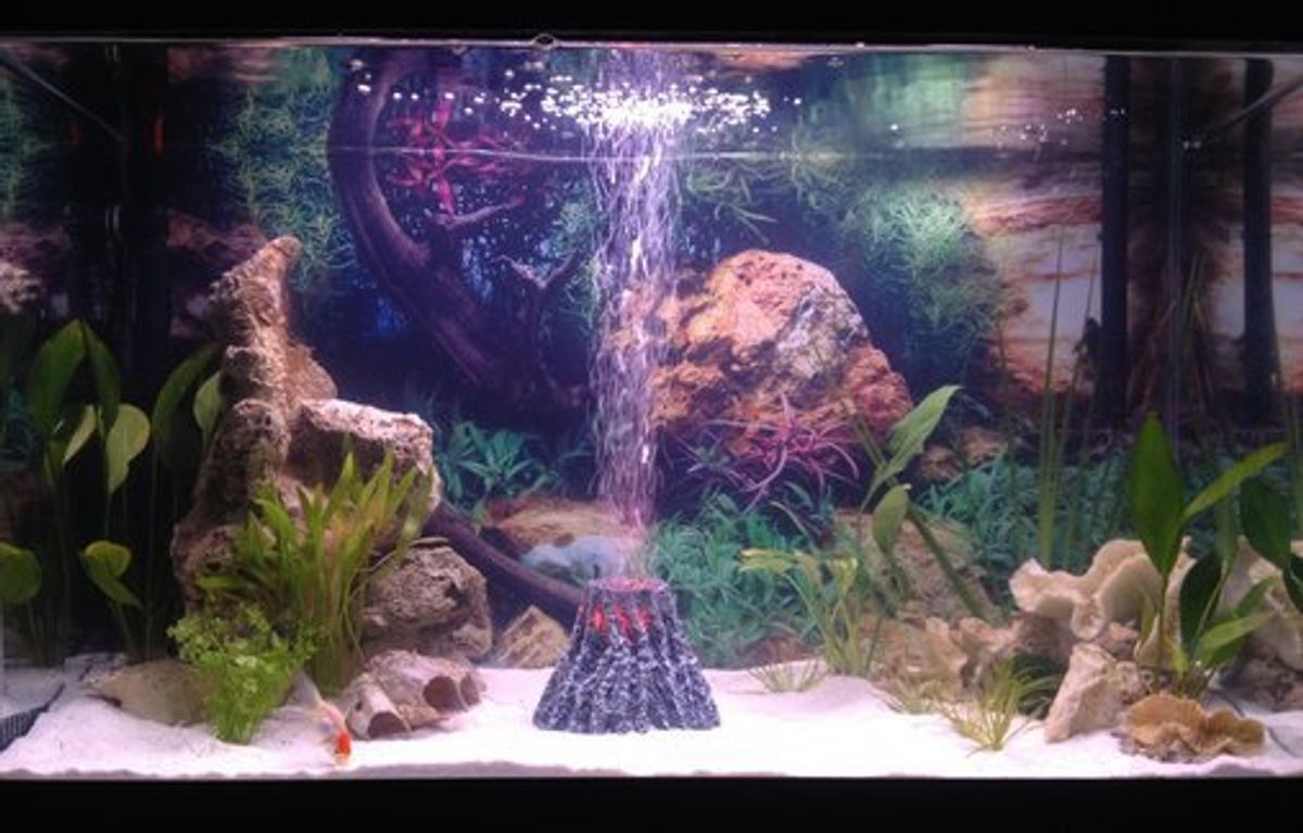 freshwater aquarium lighting