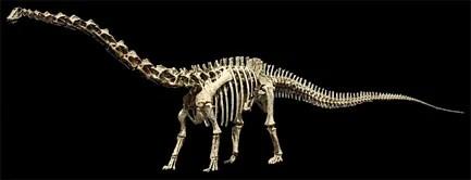 File:Seismosaurus SK.jpg
