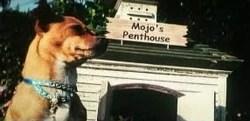 Mojo..