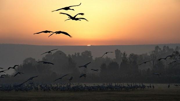 Озеро Хула. Фото Ави Гиршфельд