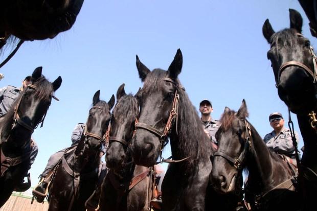 Каждая полицейская лошадь - на вес золота. Фото: Ярив Кац