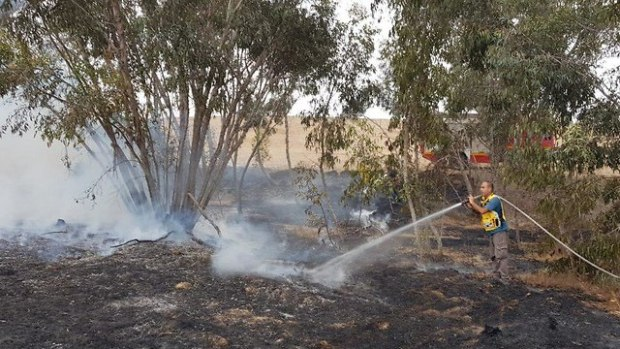 Пожарные тушат огонь, охвативший лес Беэри. Фото: Ронен Хамелех (Photo: Ronen Ha'Melech)